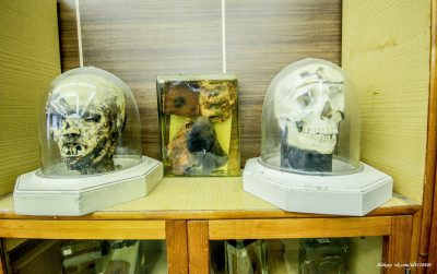 музей-судебной-медицины4