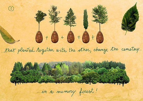 Выбери дерево себе на гроб