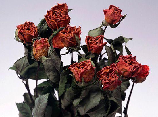 Мертвые цветы