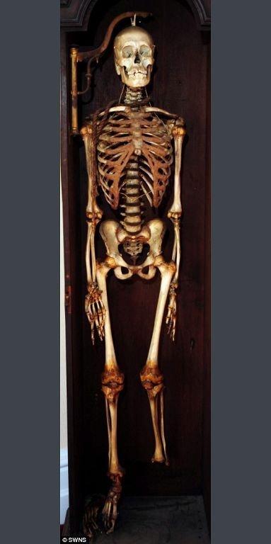 Скелет Джона Хорвуда