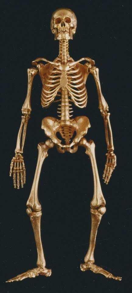 скелет из золота