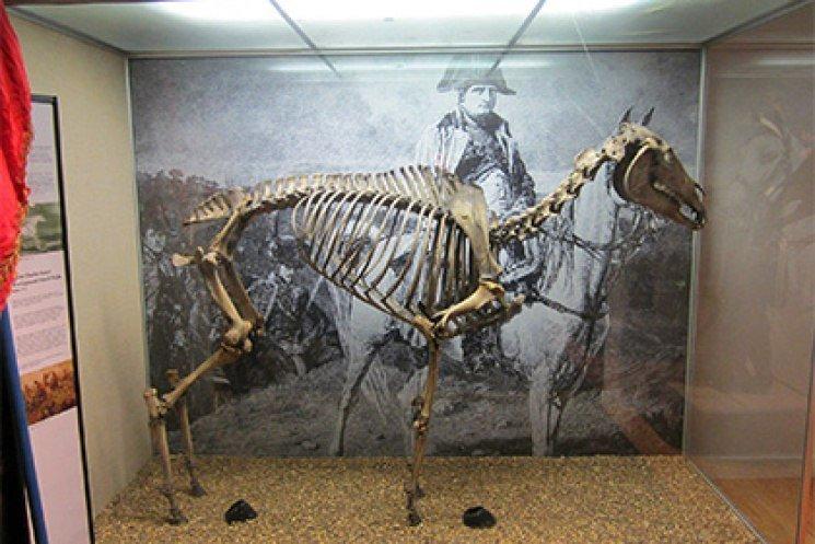 Маренго конь наполеона Баттевэнт