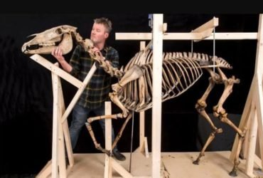 Скелет коня Наполеона
